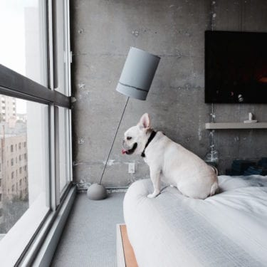french bulldog hotel