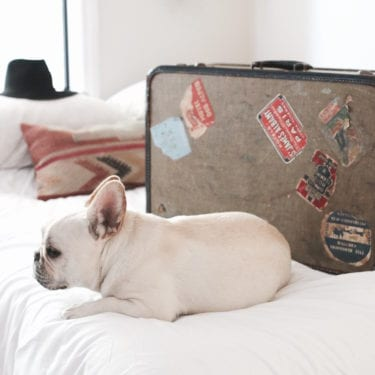 french bulldog with suitcase