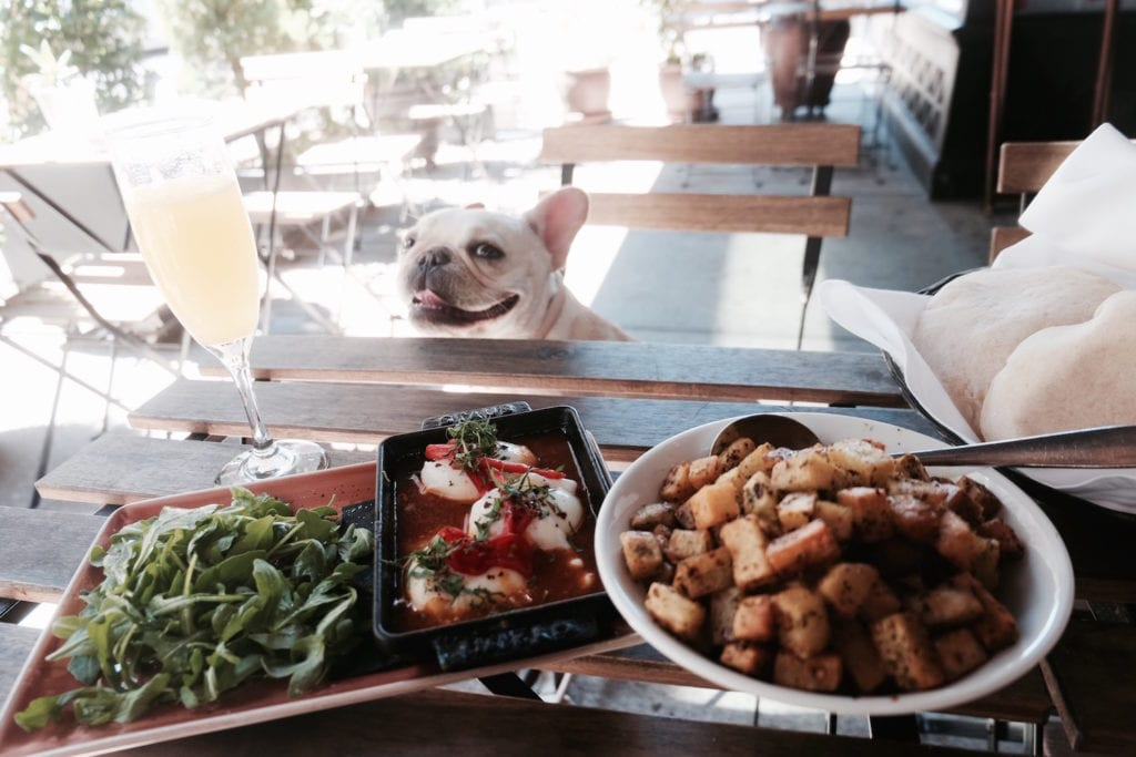 Dog Friendly Restaurants in NYC Food Diary