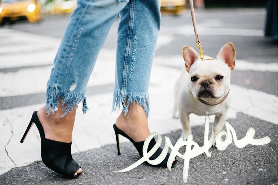 frenchie and shoes