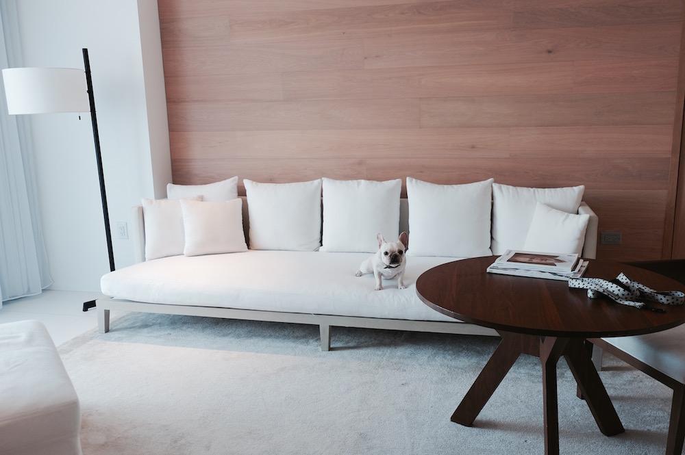 frenchie white sofa