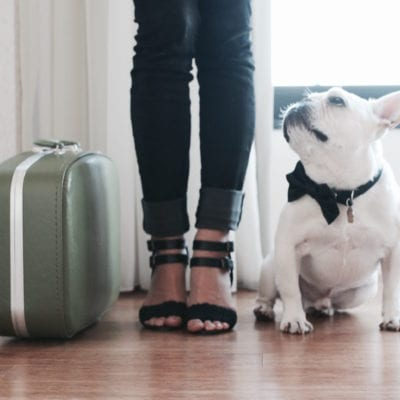 Best Airline Carriers For Your Dog