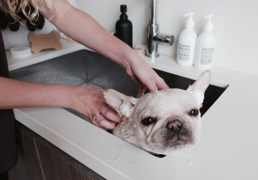 How To Bathe Your Dog Properly At Home Where S The Frenchie