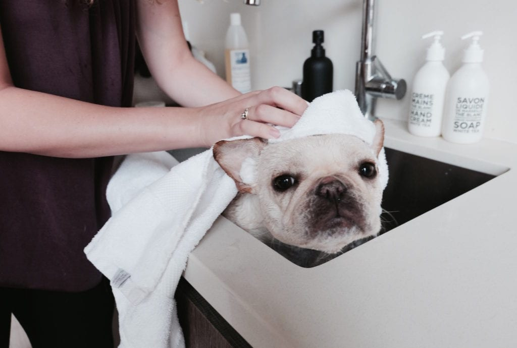 how to clean french bulldog