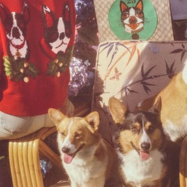 gucci capsule collection dog