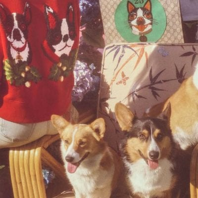 Gucci Capsule Collection for the Year of the Dog