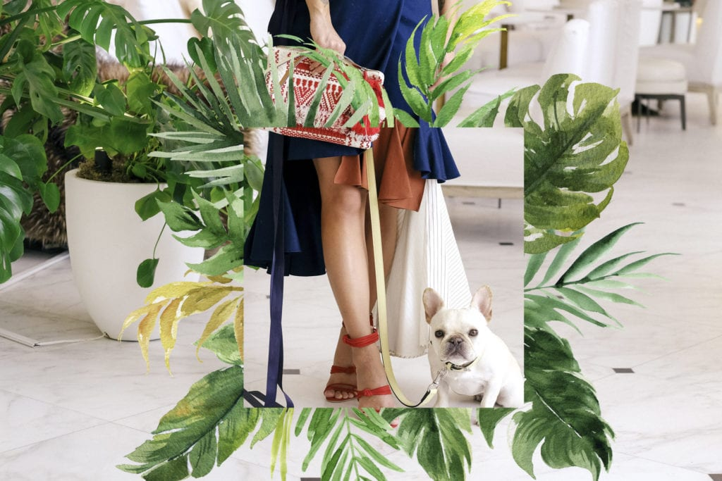 french bulldog travel fashion