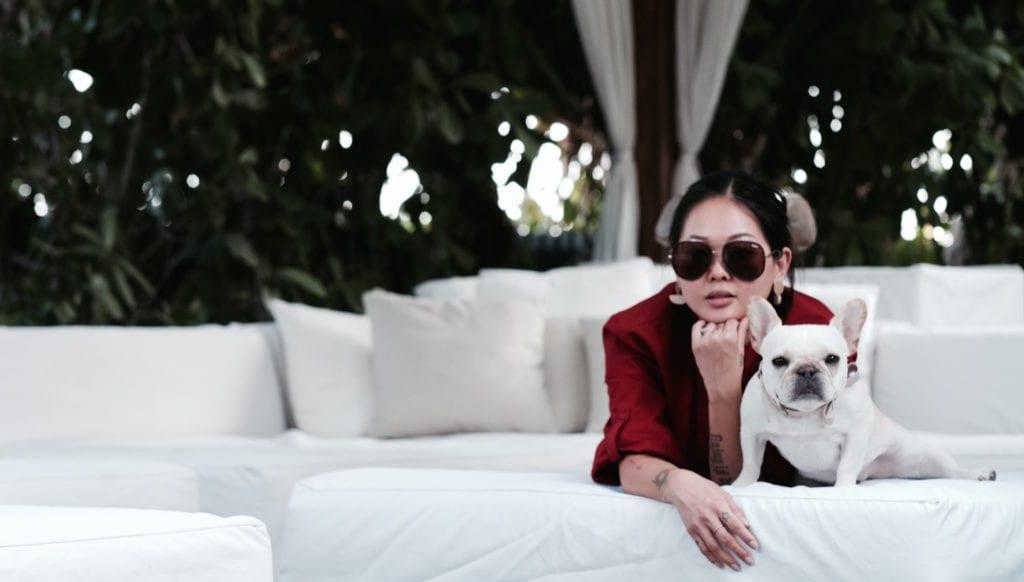 dog at hotel blog
