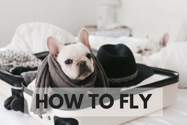 how to fly with your dog