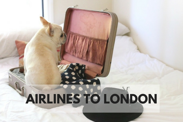 how to fly to england with dog