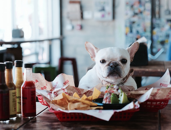french bulldog tacos