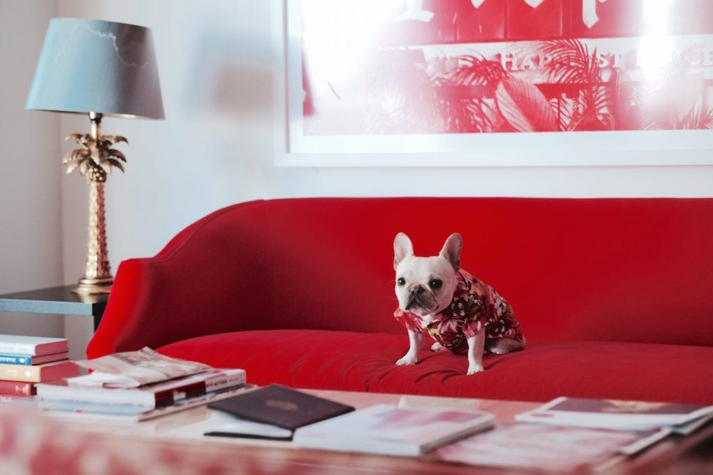 faena hotel room dog friendly