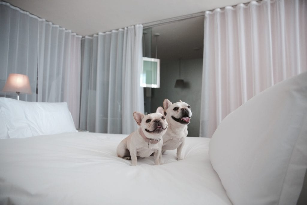 dog friendly hotel in london