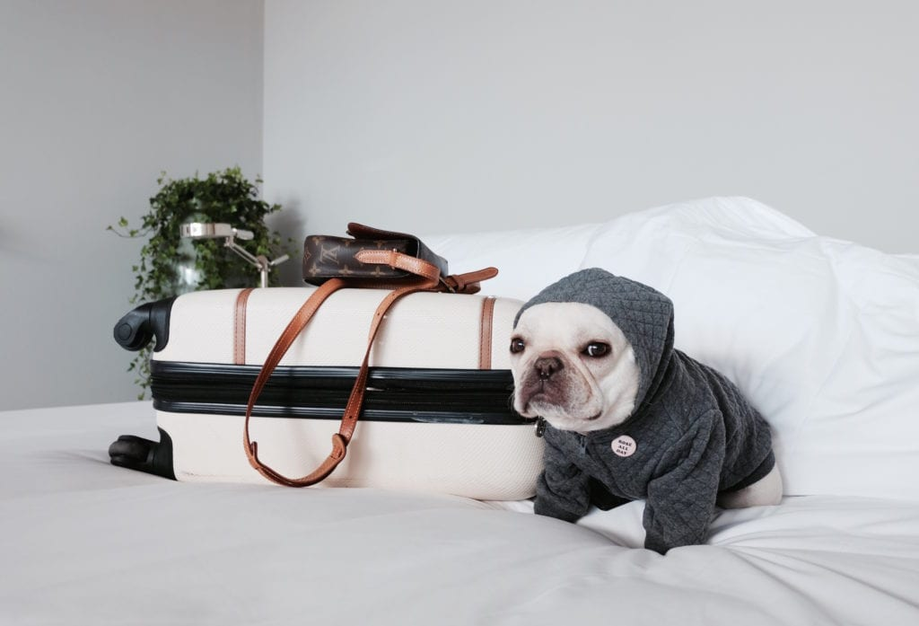 how to travel with my dog
