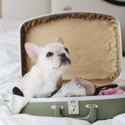 Ultimate Guide To Travel Hacks + Tips For Traveling With Your Dog
