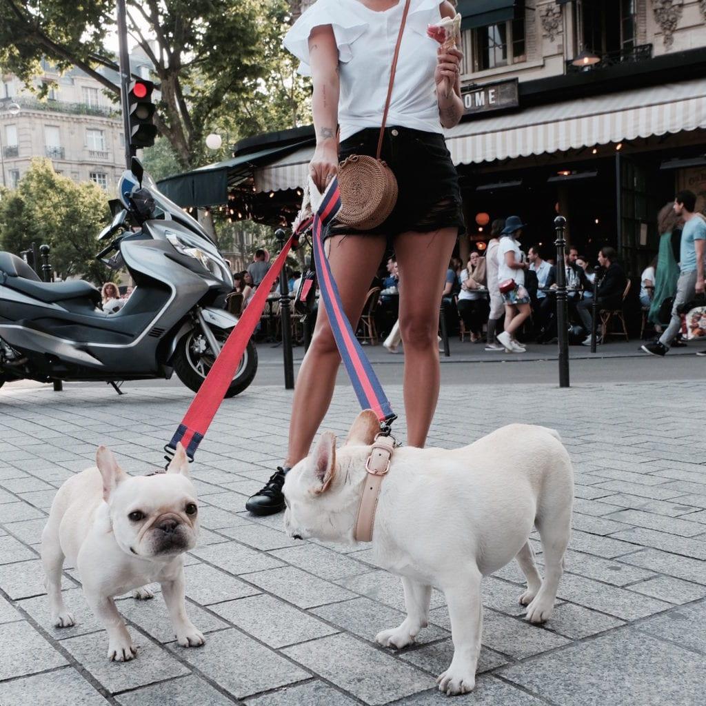 french bulldogs walking on street