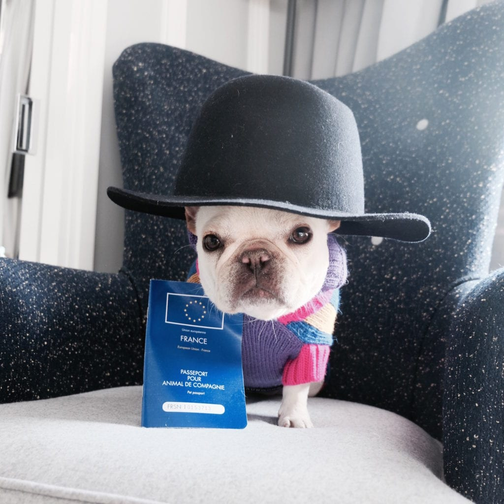how to get passport for my dog
