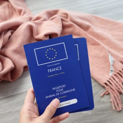 What You Need To Know About Pet Passports