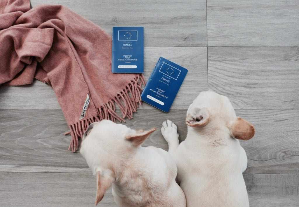 passport for my dog