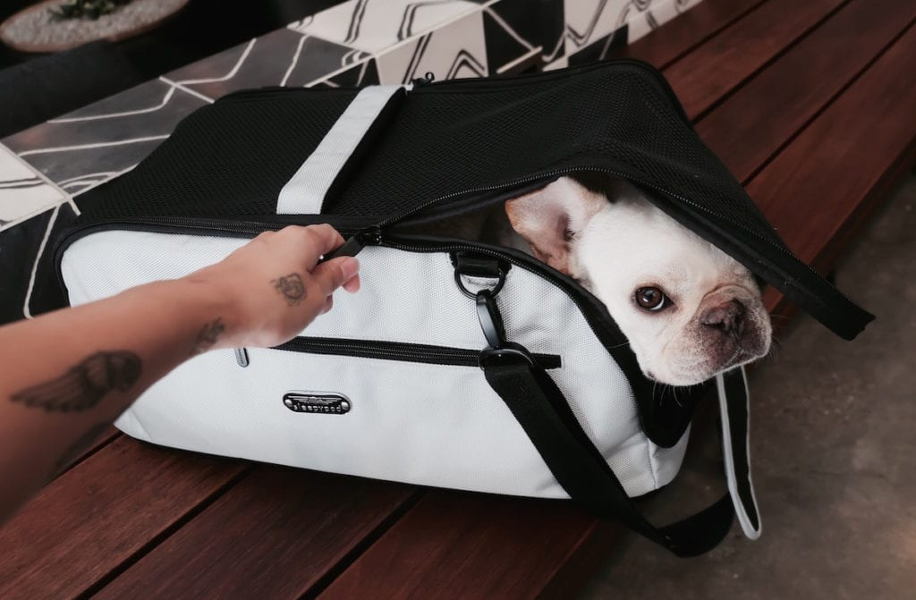 airline carrier for dogs